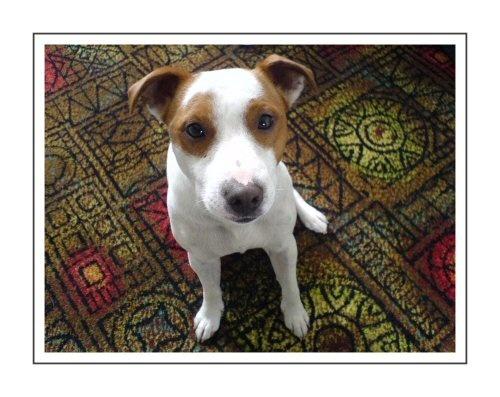 Good Dog by NickC