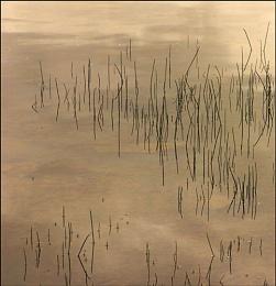 Flooded Grass - Study2