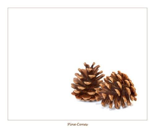 Pine cones by sferguk
