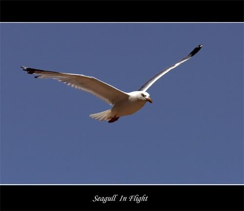 Seagull 2 by Keith-Mckevitt