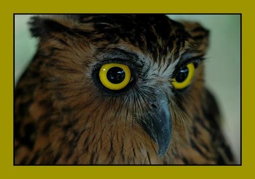 An Owl by Saderi