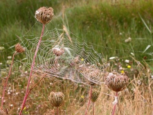 Cobweb by NorahF