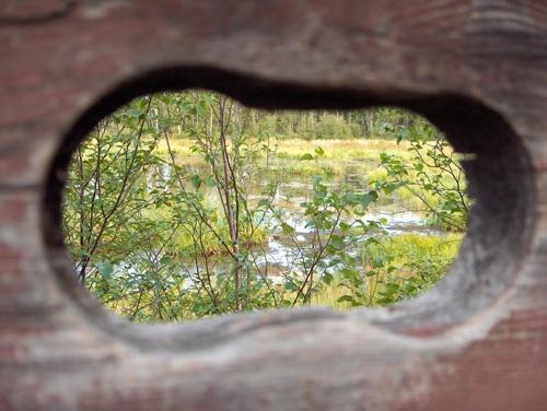Peeking by Shelley
