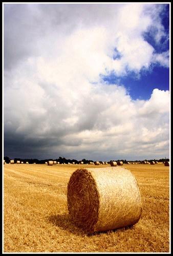 Post harvest. by jimbo_t