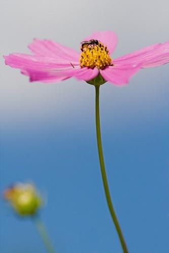Little flower by GregorP