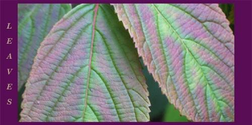 Leaves by AnnieK