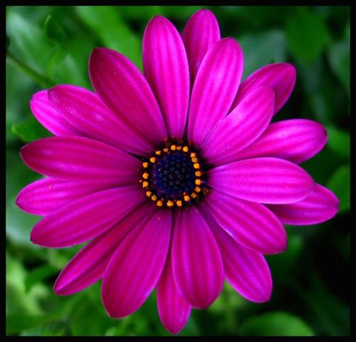 Flower by Pegon