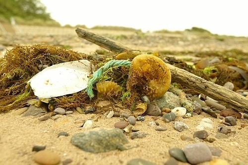 beach life by Mark_Readman