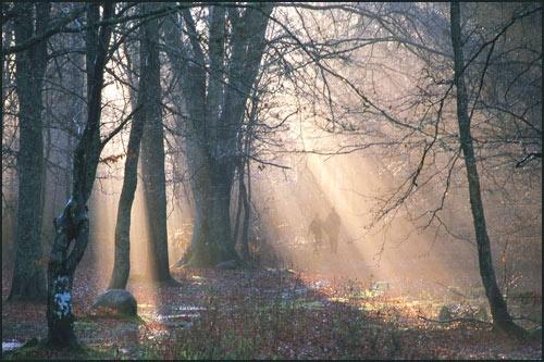 Caddam Wood by MalcolmM