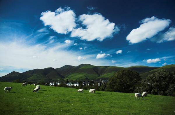 Sky Sheep by philjoel