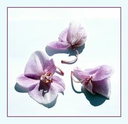 Fallen Orchids