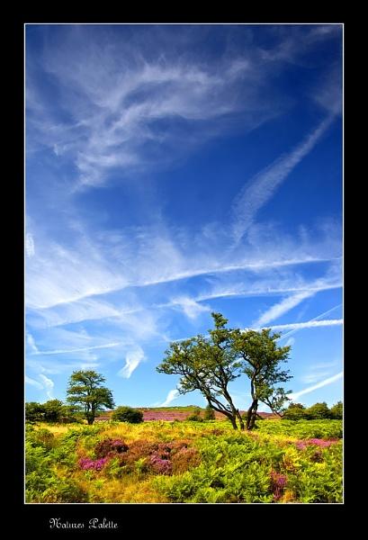 Natures Palette by cdm36