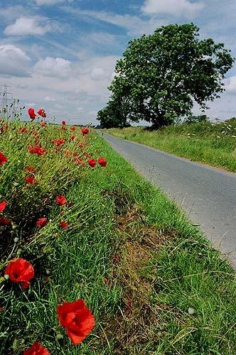 Poppy Road by DannyD