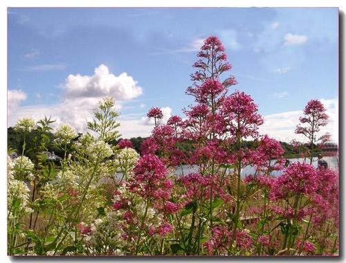 Glorious Weeds by Mavis