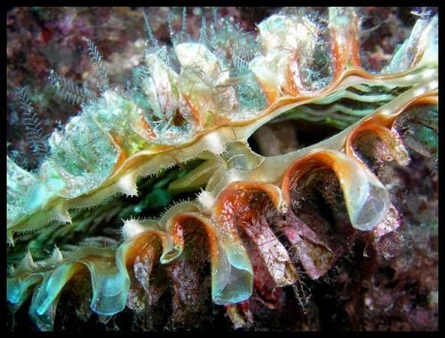 Clam by PeteG