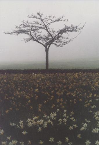 Mist(y)ree by KarlmarxEra