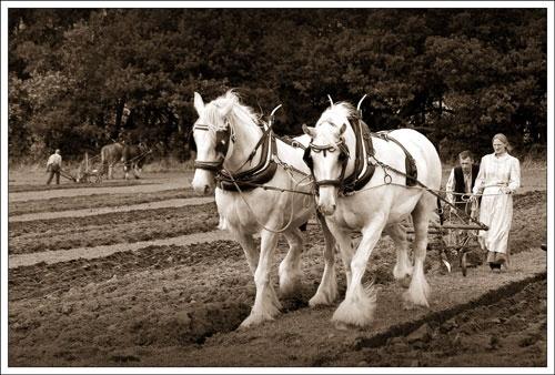 Horsepower by stevenb