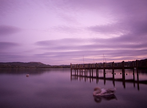 Dusk Jetty & Swan by sut68