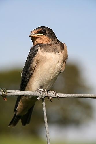 Bird on a wire by thearmsofvenusdemilo