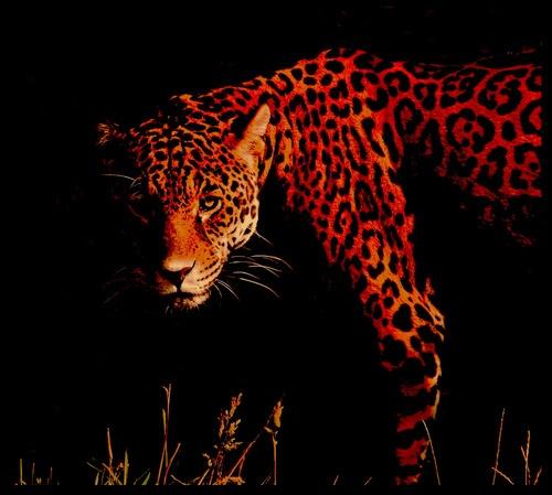 Jaguar by cconstab