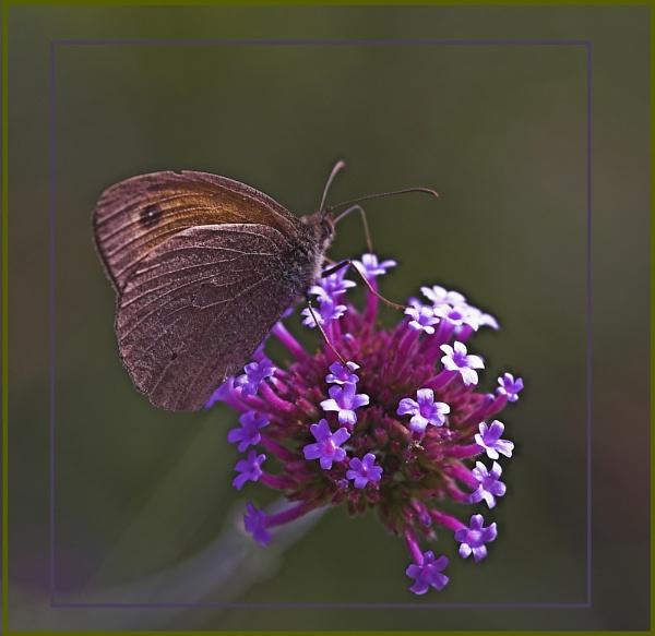 brown one by OLDNIK