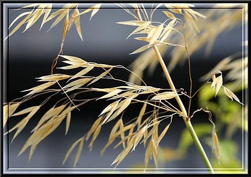 Grass by Warped_Mind