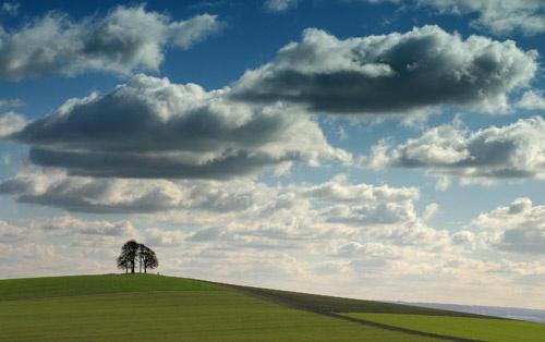 Sky+Trees by chrisco