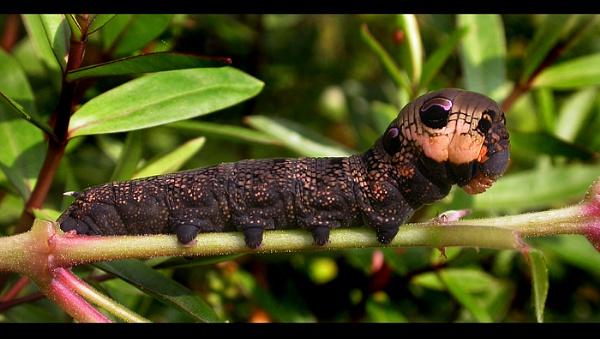 Cute bug ? by naturenut