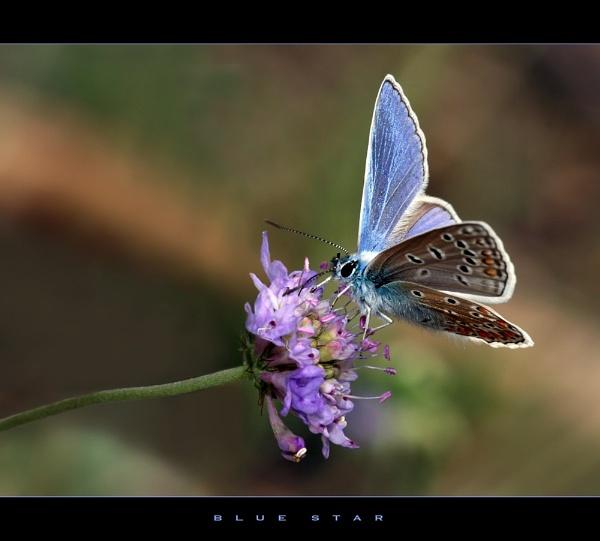 Blue Star by celestun