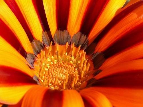 Orange by dani2