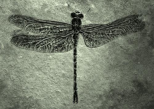 An original dragonfly shot by u08mcb
