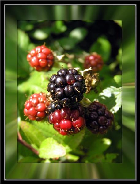 Summer Berries by steve5452