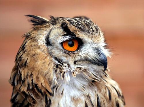 My Feathered Friend by davidjenkins