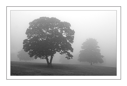 Morning Mist by chrisco