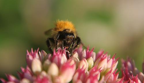 Bee by GarethH