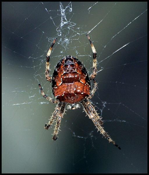 spider by petegaylard