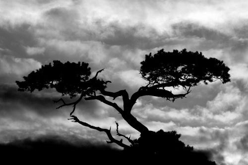 Lightning Tree by o_neip