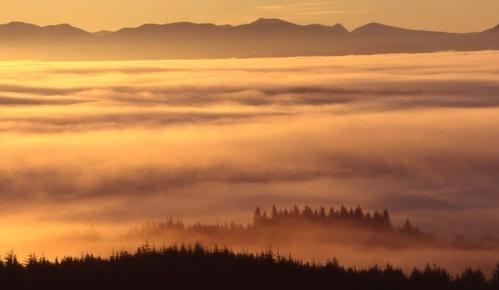 Sea-fog by Falconer