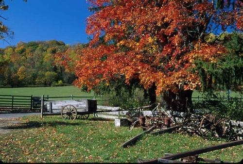 fall by bernwebb