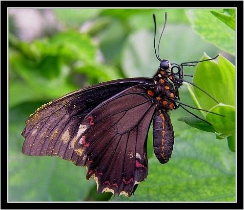 Black beauty by gapet