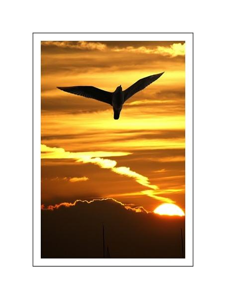 dare to soar by clintnewsham