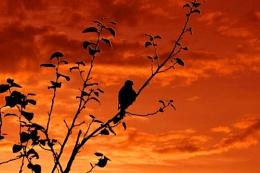 Merlin @ Sunset