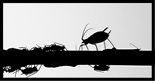 Insect outlines by hsreid