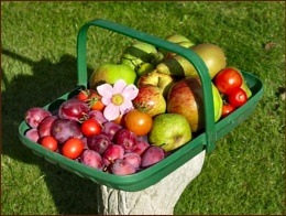 Our Garden Goodies