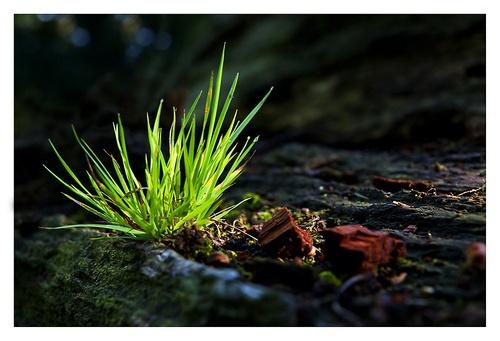 A bit of grass by katieb