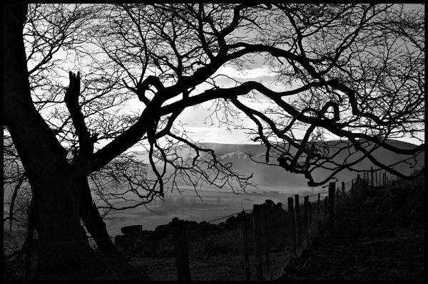 Tree in a Smoky Glen by amaryllis