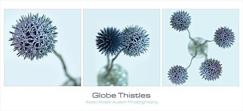 Globe Thistles by ading