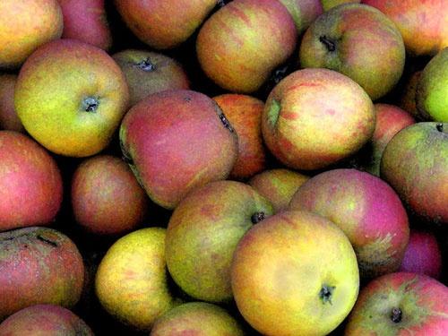 Apples by samstan