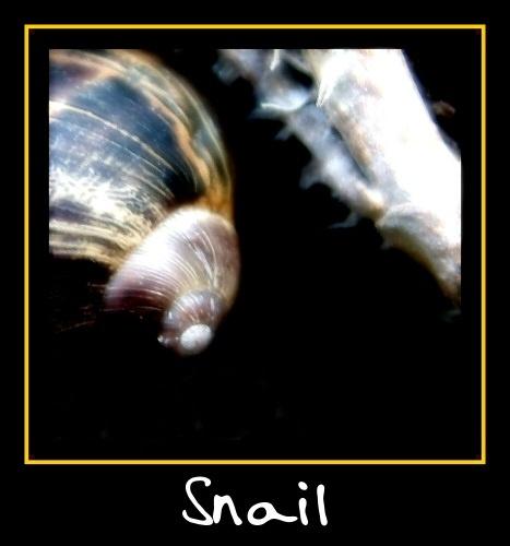 Snail by mr chilli
