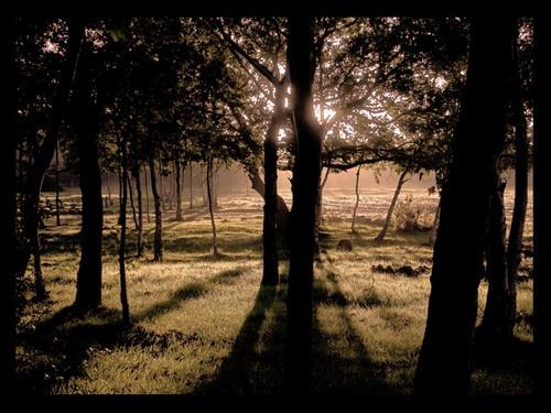Through The Trees by buckleyi